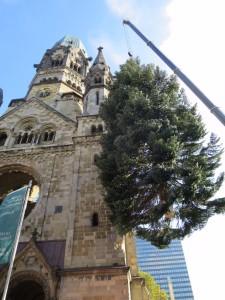 Eine stattliche Nordmanntanne steht wieder zwischen Gedächtnis-Kirche und neuer Kirche.
