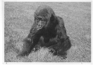 Die junge Fatou 1959.