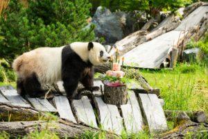 Geburtstagstorte für Meng Meng.
