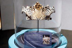 Ein zeremonieller Leopardenfell-Kopfschmuck, der Nelson Mandela von König Xolilzwe Sigcawu vom Volk der Xhosa verliehen wurde. Es war das erste Mal seit 200 Jahren, dass diese alte Kriegerehre jemand anderem als einem König zuteil wurde.