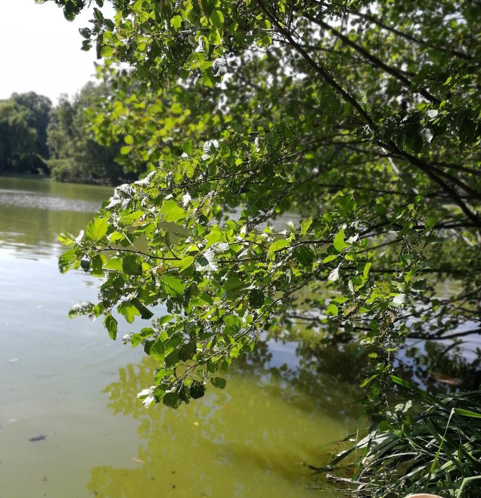 Die Wasserqualität im Lietzensee spielt eine wesentliche Rolle.