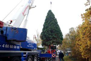 Der Mammutbaum schmückt jetzt den Weihnachtsmarkt auf dem Breitscheidplatz.